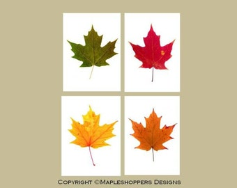 Maple Leaf Prints-Instant Download-DIY Print-Your-Own-5x7 inches-Set of 4 Original Autumn Leaf Prints-PDF Format-Modern Art-Economical Art