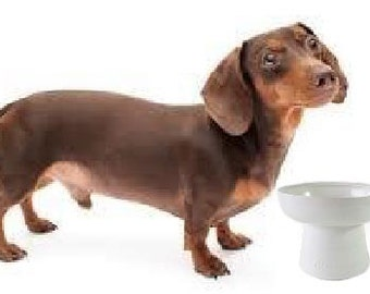 Raised Stoneware Dog Bowl for Short Pets
