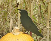 Primitive metal crow / metal crow / Halloween stake / crow stake /  yard art / metal garden art