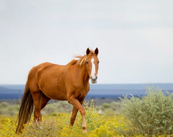 Horse in Meadow Photograph - 11x14 Color or Black and White Horse Photography Print
