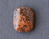 Fossil Stone Cabochon - Fossil