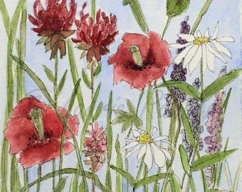 Red Poppies Watercolor Original Nature Art Garden Flower Illustration