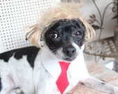 Donald Trump Pet   wig and red color   neck tie  for dog or cat
