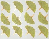Ginkgo Leaf Decals for Ceramic, Glass and Enamel