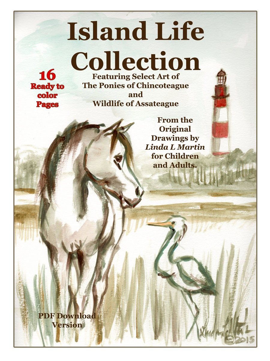 Chincoteague Pony and Assateague