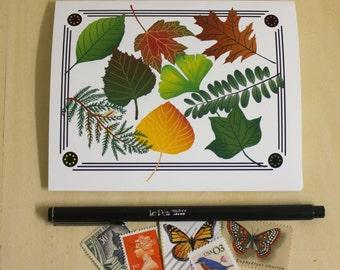 Leaf Specimen Notecards - Boxed Set of 4