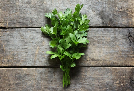 Cilantro, heirloom seeds, herb seeds, organic seeds from our farm, herb garden, eco friendly, companion planting, gardener