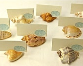 10 Seashell Card Holders with optional cards - Beach Weddings, Showers, sea shells, place cards, dessert table cards nautical