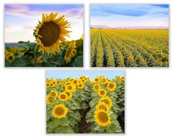 Set of three sunflower photographs, Sunflower field photography, Flower Photography,