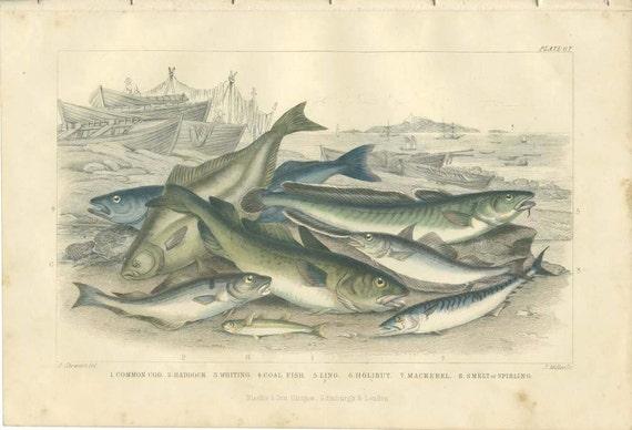 Cod, Haddock, Whiting, Coal Fish, Ling Mackerel Smelt, 1870 Goldsmith 67, Antique Print, Library Decor, Country Cottage Decor, Fishing Decor