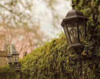 """New Orleans Garden District """"Ivy Wall"""" Fine Art Photography - garden wall, moss, ivy, home decor wall art -  spring photograph"""