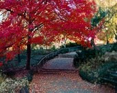 Fall in Central Park Photography Red Rustic Wall Art- NYC Art New York Print- Large Wall Art- Red Tree in Autumn