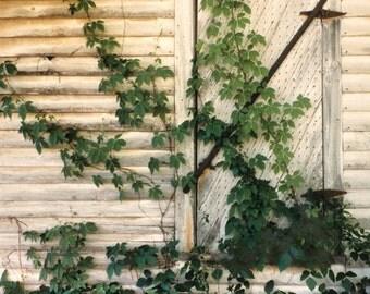 Old Door and Kudzu