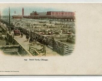 Union Stock Yards Chicago Illinois 1907c postcard