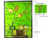 Phytophthora infestans Late Potato Blight Stained Glass Panel Made to Order
