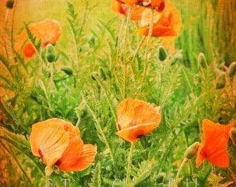 Poppy Photography, Garden Wall Art, Poppy Wall Art, Orange Flower Home decor, Oriental Poppy Large Wall Art, Oversized Nature Photography