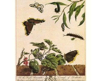 SALE Vintage Book Plate Butterfly Buy 3, get 1 Free