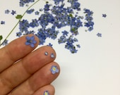 Pressed Flowers Forget Me Not. Dried Blue & Paler Small Pressed Petals. Loose. Tiny Real Mixed Shades Of Blue Dried Flowers from mirrymirry