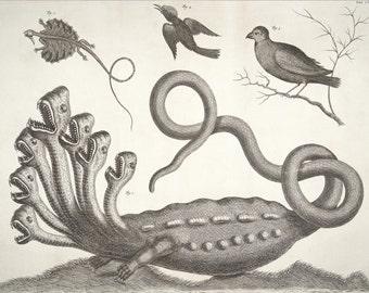 The Hamburg Hydra, Archival Quality Print