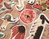 Des créatures bizarres Collage surréaliste ultime 12 papier autocollant mat ensemble