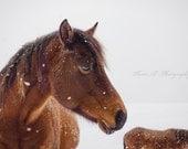 "Fine Art Photograph ""Annie"" Wall Art Horse Cabin Rustic Decor Gift Print Cowboy Farm Mountains Winter Brown White Western Country Snow"