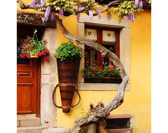 Fine Art Color Travel Photography of Wisteria and Yellow Wall in France
