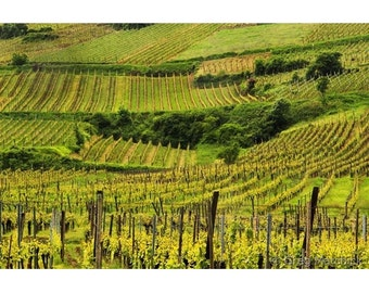 Fine Art Color French Landscape Photography of Vineyards of Alsace - Above Ammerschwihr