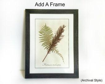 Add a Frame! Make any Specimen a Ready to Hang Framed Botanical - Framed Herbarium Art