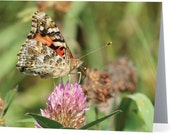 Set of 10 Assorted Butterfly Note Cards, Greeting Cards, Nature Stationery, Nature Photography