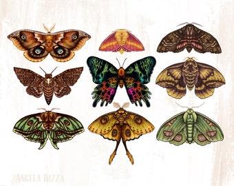 "Moths Wings 8x10"" Metallic Print"