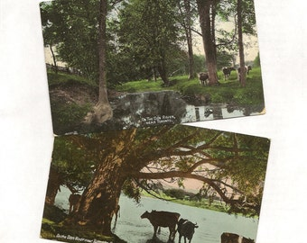 Cattle on the Don River TORONTO Antique Postcard Pair 1907 Cool Shade Clear Water – Long Gone Scene From Toronto's Past