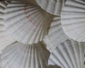 White Baking Scallop Shells for Coastal Decorating/ Arts/ Crafts/ Loose Seashell Supplies/ yellow, pink & orange