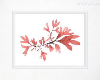 Seaweed Watercolor Print - Red Seaweed Art, Botanical Print / Any ONE 8x10 OR 8x11 Beach Art, Coastal Decor