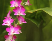 orchid photo  home decor print decor wall art   instant download