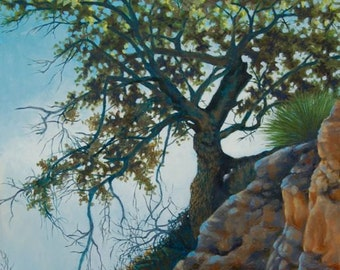 "Old Oak Tree in Cochise Stronghold in the morning light. 14"" ht X 10 3/4"" w signed print, nature art, landscape"