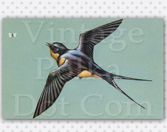 Vintage Clip Art Swallow Bird in Flight Butterfly Nature Illustration from Old Card Lovely Graphic Digital Instant Download Printable Art
