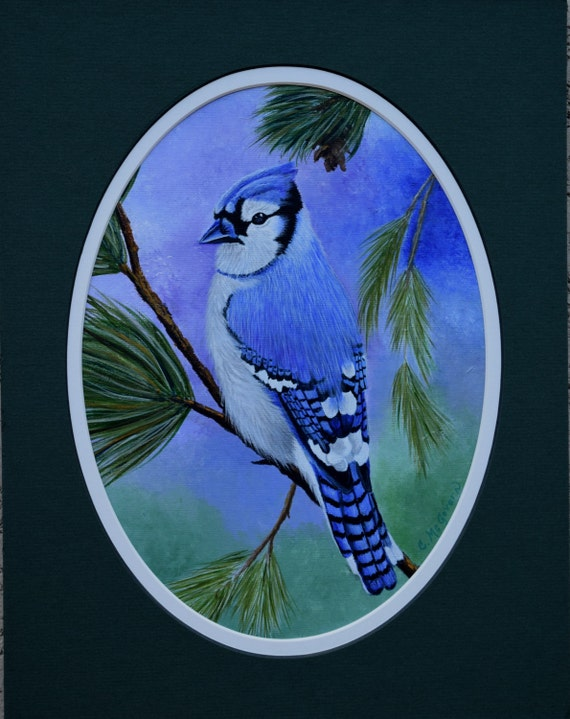 Framed Bird Painting - Blue Jay - wildlife, blue, birds, pine tree, pine cone, red berries, original acrylic painting, black mat, cobalt