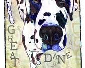 Pop Art Harlequin Great Dane Leash Hook Dog lover gift pet home decor dog leash holder