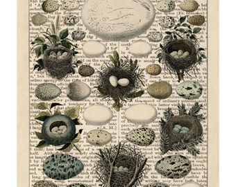Vintage Style Natural History Antique Bird Egg Print Set from Curious London