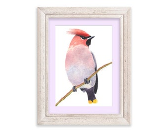Colorful Waxwing