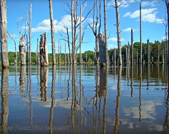 Swamp reflection - matted photograph