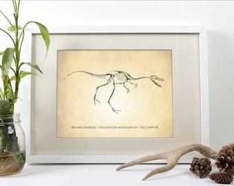 Dinosaur Art, Velociraptor Art Print, Dinosaur Art Print, Velociraptor Natural History Poster, Natural History Dinosaur, Raptor Art Print