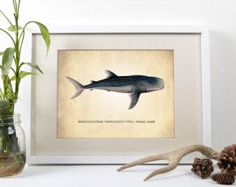 Whale Shark Art Print, Art Print, Natural History Shark Poster, Natural History Shark Print, Shark Poster, Shark Art Print, Whale Shark