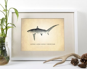 Thresher Shark Art Print, Natural History Art Print, Natural History Poster, Natural History Shark Print, Thresher Shark, Shark Art Print