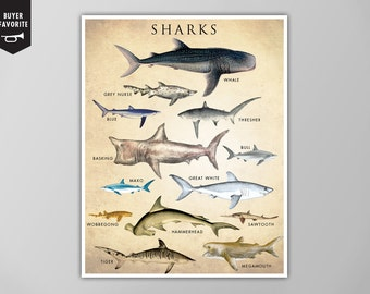 Shark Chart Art Print, Shark Chart Natural History Poster, Natural History Scientific Print, Shark Chart Art Print, Vertical Shark Chart