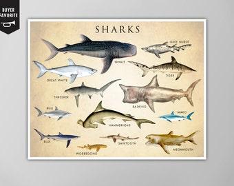 Shark Chart Poster, Shark Chart Art Print, Shark Chart Natural History Poster, Natural History Scientific Print, Shark Chart Art Print