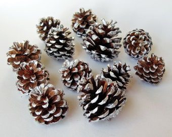 50 Silver Edged Small Pine Cones For Crafting
