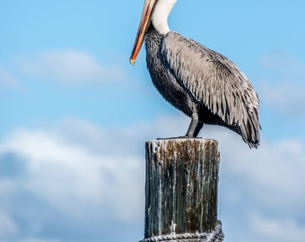 Pelican on Piling Print, Fine Art Photo Print, Wall Decor, Bird, Florida Keys Print, Pelican Print