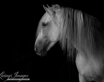 White Stallion Against the Dark - Fine Art Horse Photography - Horse - Black and White - Andalusian - Fine Art Print