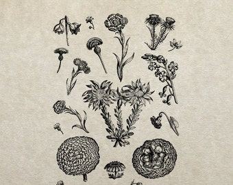 80% OFF - Thistles and wildflowers sketch (Image 94) - PNG / JPG Digital Image Download - Transfer / Iron on / Clip-art / Commercial Use